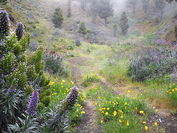 La Palma, Wandertour, Blütenpracht