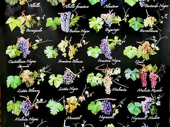 La Palma, Weinverkostung, Weinsorten