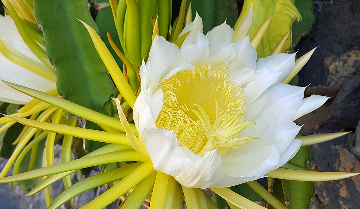 La Palma, Blumenpracht