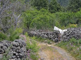 La Palma, Fototour abseits der Touristenpfade