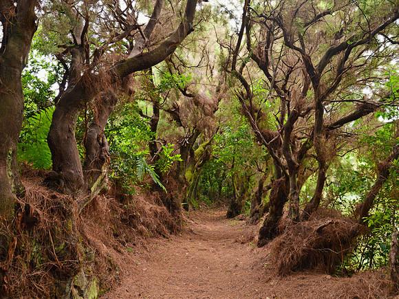 La Palma, Zauberwald