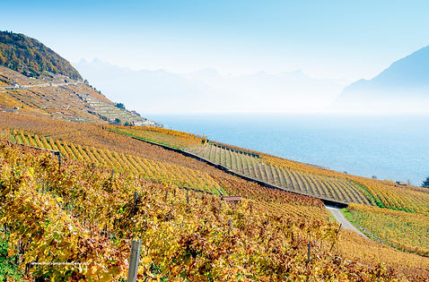 Lavaux UNESCO https://www.flickr.com/photos/dirtybet/38151085842/in/dateposted-public/