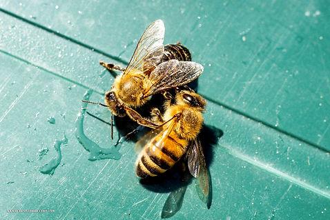 Photographie, vevey, durraive, dent de jaman, nestlé, suisse, paysage, sépia, npoir et blanc, portrait, macro, abeilles, nature hiking