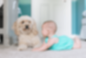 babypuppy-1170x785.png