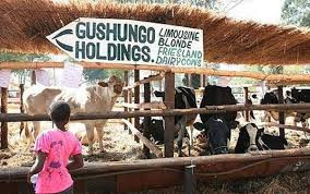 Fall of Gushungo: the difference between wealth creators & wealth consumers