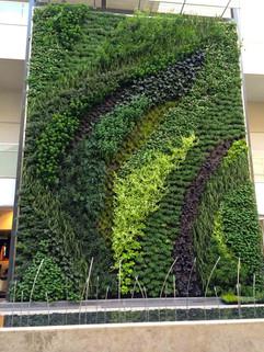 Star Gardens vertical garden (36).jpg
