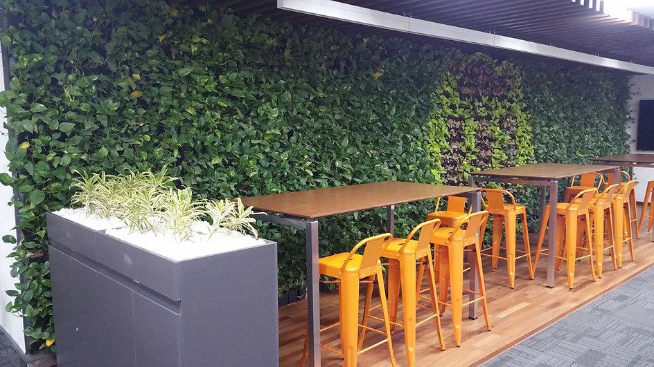 stargardens plants on hire landscaping indoor plants.jpg