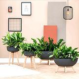 Star Gardens Indoor Plants.jpg