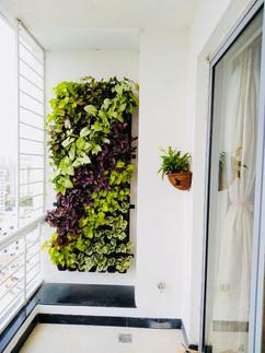 Star Gardens vertical garden (1).jpeg