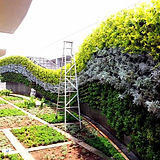 Star Gardens Vertical Garden .jpg