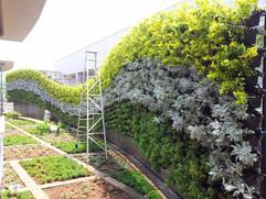 Star Gardens vertical garden (22).jpg