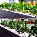 Star Gardens Plants on Hire_edited.jpg