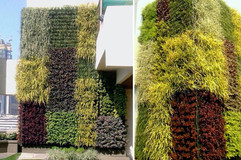 Star Gardens vertical garden (57).jpg