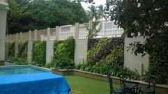 Star Gardens vertical garden (11).jpg