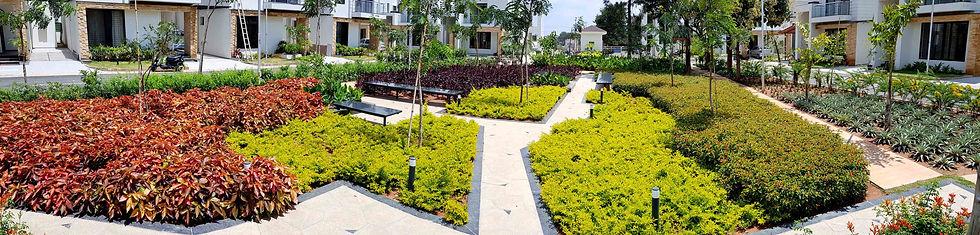 Star Gardens Landscape Plants.jpg
