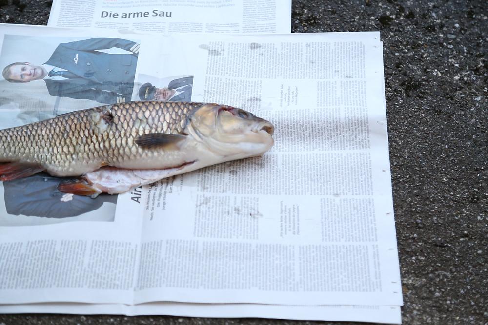 White fish :(
