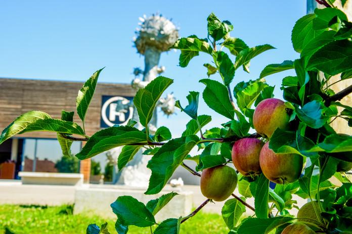 Apfel mit (R) (2).jpg
