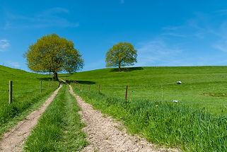 landscape-3482941_960_720.jpg