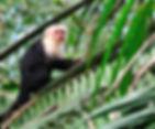 Monteverde Cloud Forest Photo.jpg