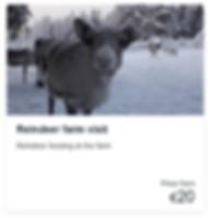 Reindeer Farm visit.PNG