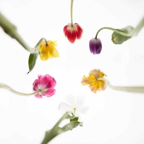 Tulpen_bunt