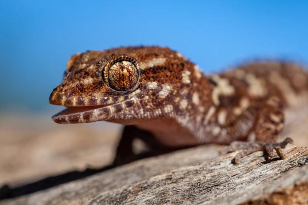 Gecko eye and smile