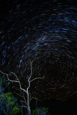 Star Trail Tree