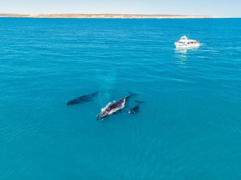 Whales visiting Kalbarri