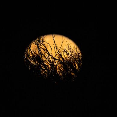 Moon Veins