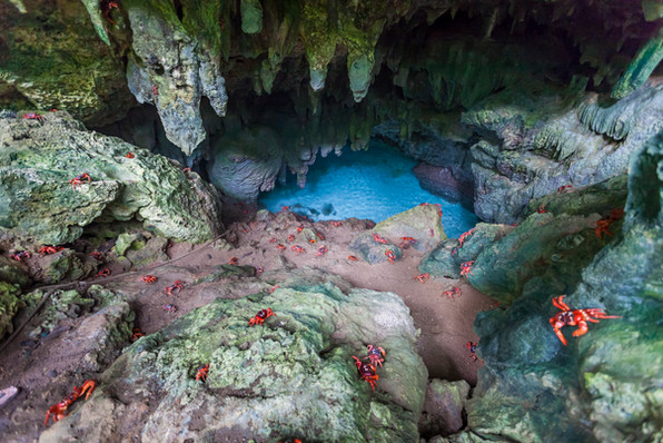 Red crabs descending into the Grotto