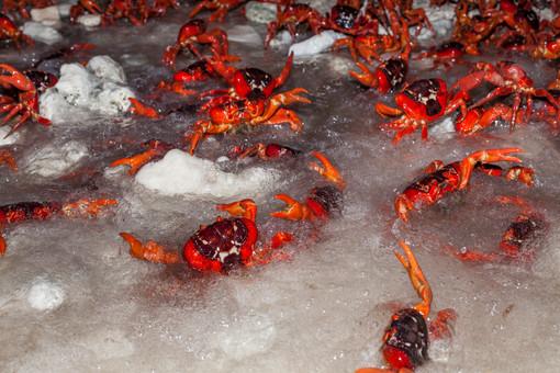 Ethel Beach spawning