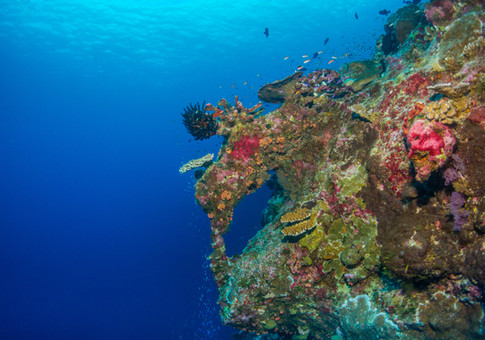 Egeria Coral Window