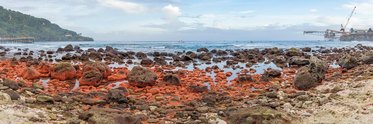 Cove Red crab babies return pano