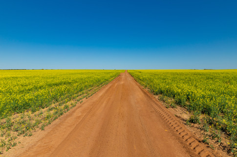 Driving through the Canola Fields