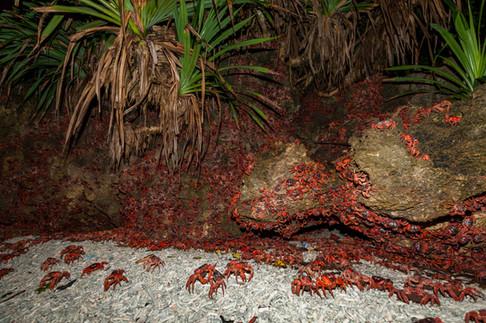 Ethel Beach spawning night