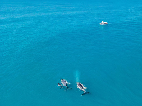 Meeting whales