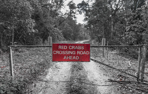 Red Crabs Rule