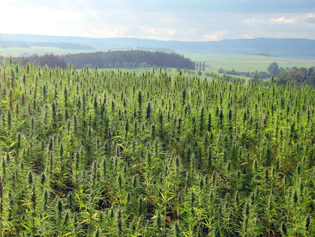 What Is Hemp Used for and What Does Future Innovation Look Like?