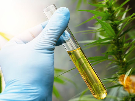 Hemp, CBD, and Using CO2 to Extract It
