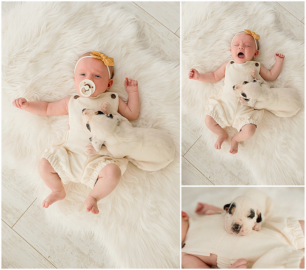 Puppies, Baby Girl, Southern Utah, Photography Studio, Photographer