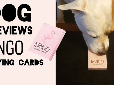 Mingo Playing Card Review By a Dog - TCC Playing Card Co