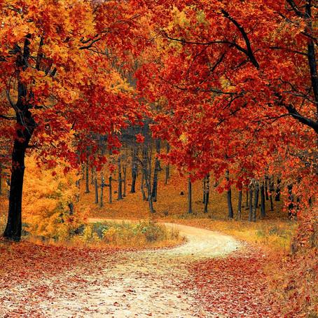 🍂L'automne, l'heure de booster son système immunitaire!🍂