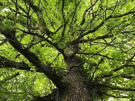 photo arbre.jpg