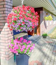 Kukka-asetelma.jpg