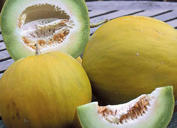 Melon, Sweet Delight