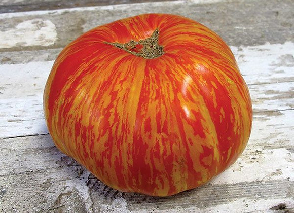 Tomato, Solar Flare
