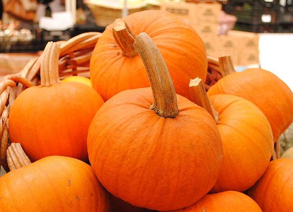 Pumpkin, Sugar Pie