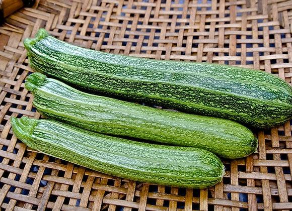 Summer Squash, Heirloom Zucchini