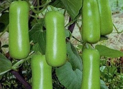 Bottle Gourd, Dhol