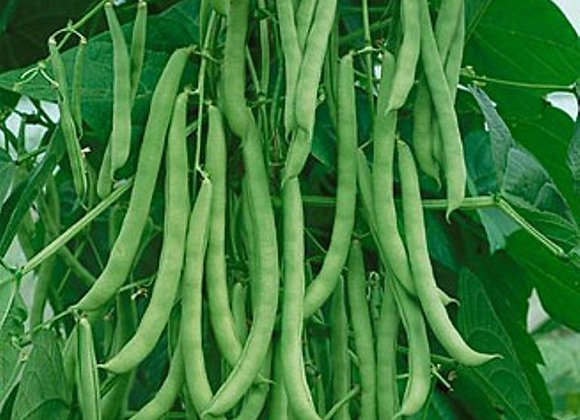Bean (Pole), Kentucky Wonder